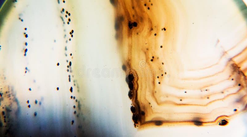 Foto do close-up de uma pedra abstrata da ágata imagem de stock royalty free