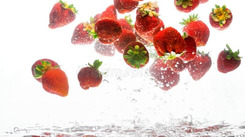 Foto do close up dos lotes das morangos maduras frescas que flutuam na ?gua clara com bolhas de ar contra o fundo branco fotos de stock royalty free