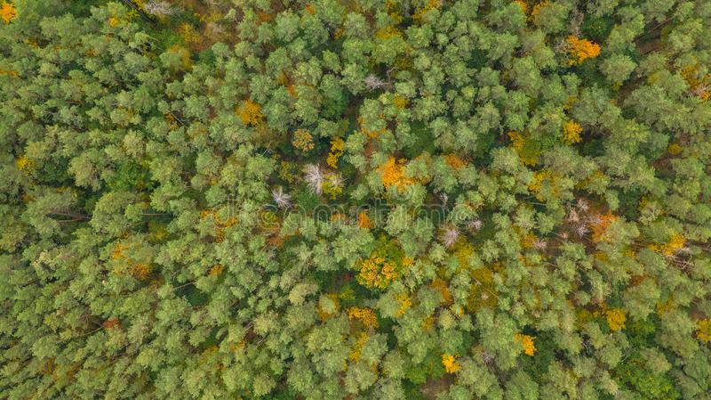 Foto do drone de cima para baixo de floresta colorida no dia do outono fotos de stock royalty free