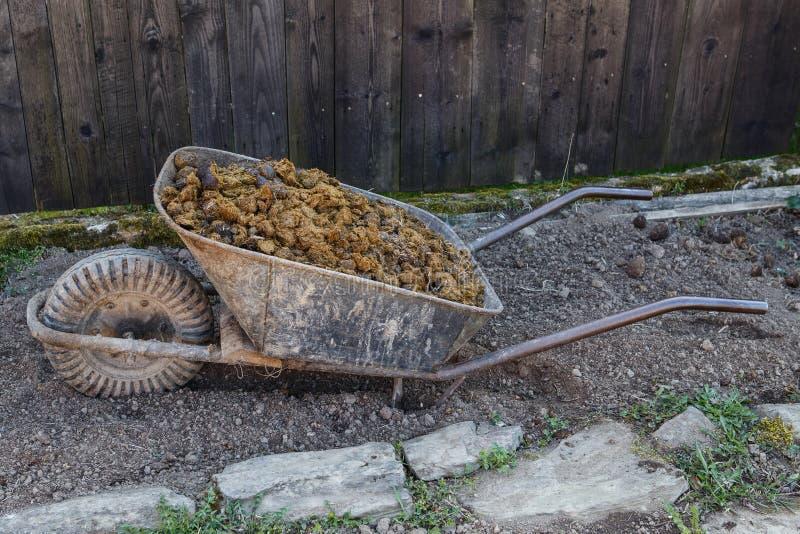 Foto do estrume do cavalo no jardim imagens de stock