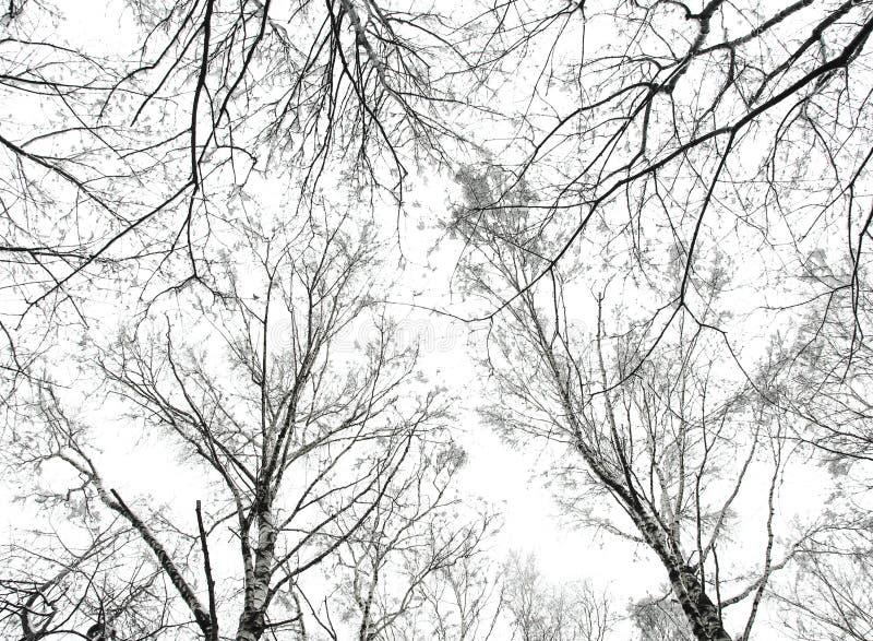 Foto do fundo abstrato das árvores imagem de stock