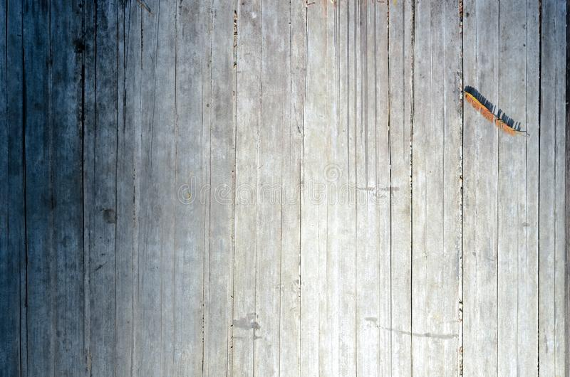 Foto do fundo e da textura da árvore de bambu seca imagens de stock royalty free