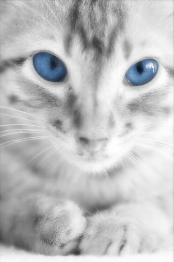 Foto do gatinho do gato - inocência foto de stock royalty free