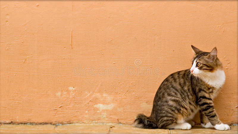 Foto do gato - sempre vigilante imagem de stock royalty free