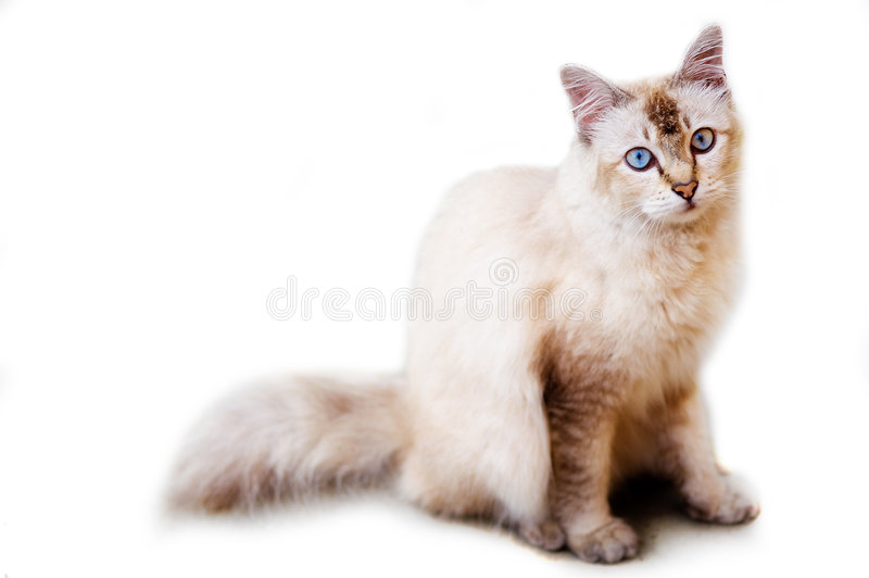 Foto do gato - surpreendida fotografia de stock royalty free