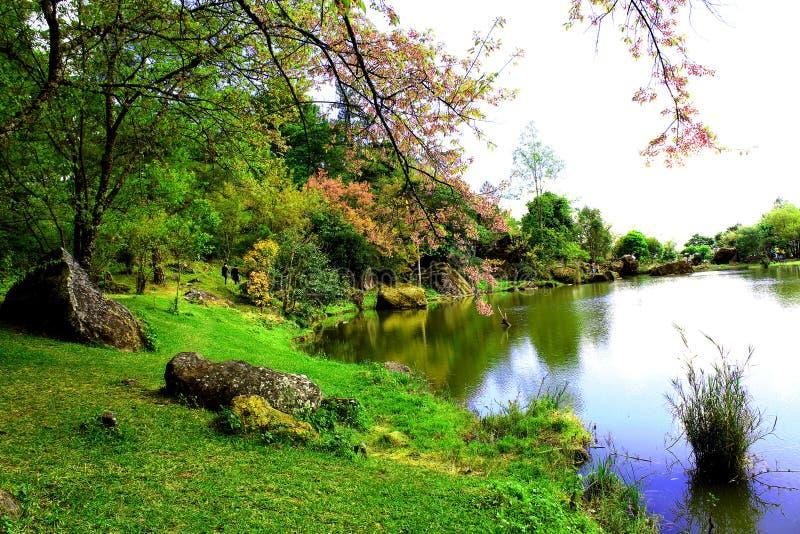 Foto Do Lado Do Lago fotos de stock