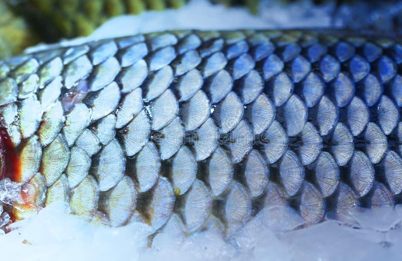 Foto do macro bonito de grandes escalas de peixes foto de stock