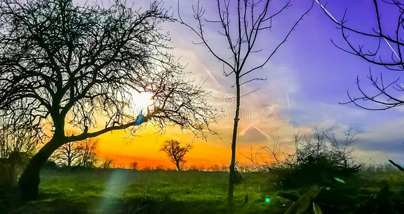 Foto do por do sol com cores bonitas e shilouetts das árvores imagens de stock