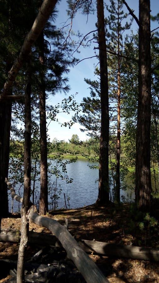 Foto do telefone celular Uma vista do lago em Sibéria ocidental, Rússia imagens de stock