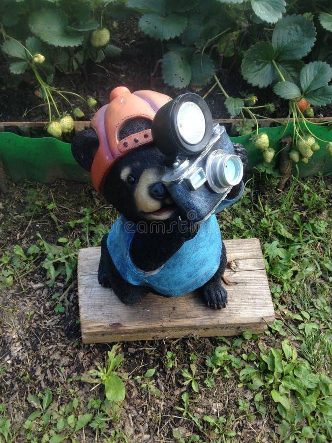 Foto do urso foto de stock royalty free