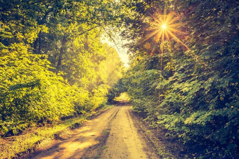 Foto do vintage da aleia bonita das árvores iluminada pela luz da manhã fotos de stock