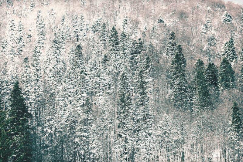 Foto do vintage da floresta Carpathian da árvore fotos de stock royalty free