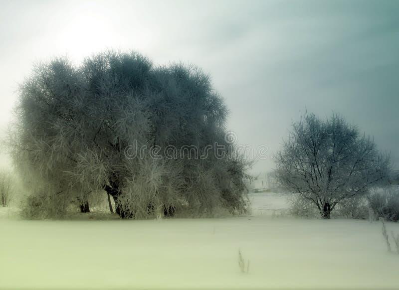 Download Árvores Do Inverno Do Vintage Foto de Stock - Imagem de outdated, foto: 29846326