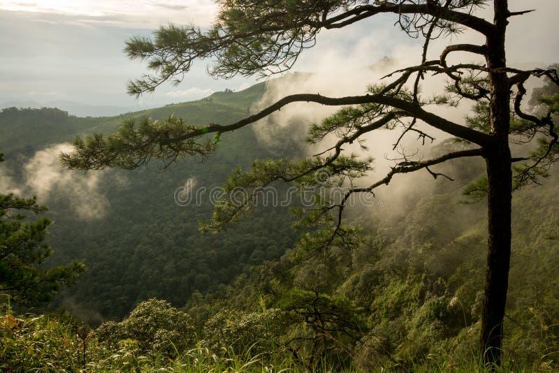 Foto dos pinheiros nas montanhas com névoa imagens de stock