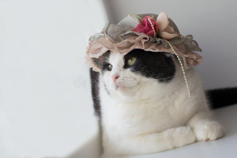Foto einer Katze in einem Dame ` s Hut stockbilder