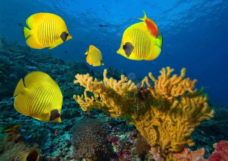 Foto einer korallenroten Kolonie stockfoto