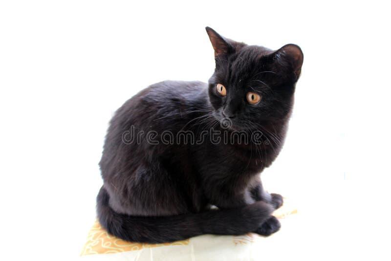 Foto einer schwarzen Katze auf einem weißen Hintergrund lizenzfreie stockfotos
