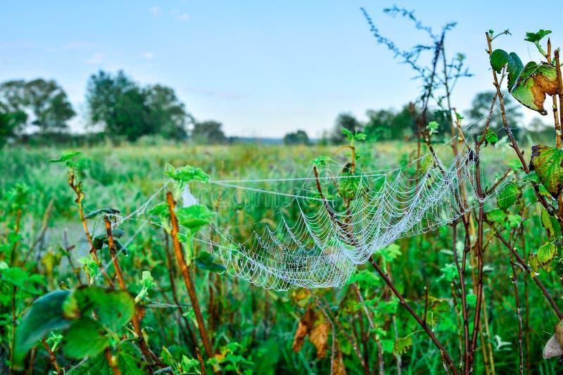 Foto eines Netzes auf einer Wiese stockbild