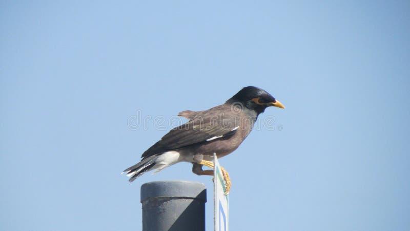 Foto eines schönen Vogels, der auf einem Verkehrsschild, Dubai sitzt stockfotos