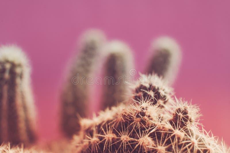 Foto entonada retra de la forma extraña del cactus en fondo rosado fotos de archivo libres de regalías