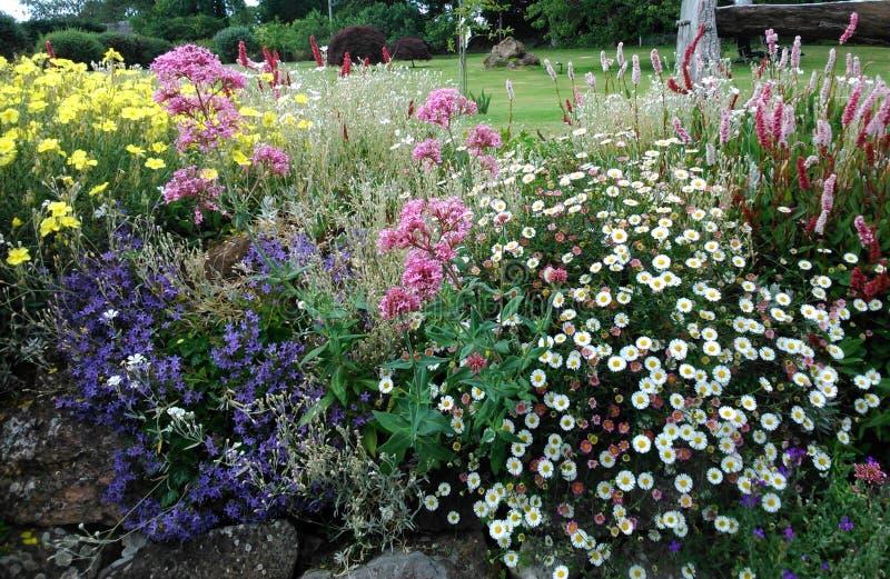 Foto erbacea inglese del fiore del confine immagini stock libere da diritti