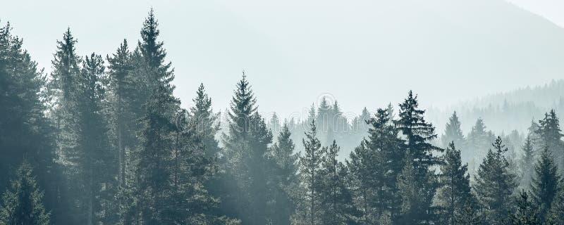 Foto estilizada de la silueta del negro de los árboles de pino imagen de archivo libre de regalías