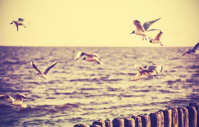 Foto estilizada retra del vintage de pájaros en el mar imagenes de archivo