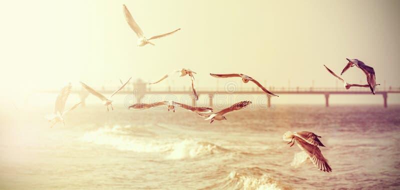 Foto estilizado retro do vintage do gaivotas foto de stock