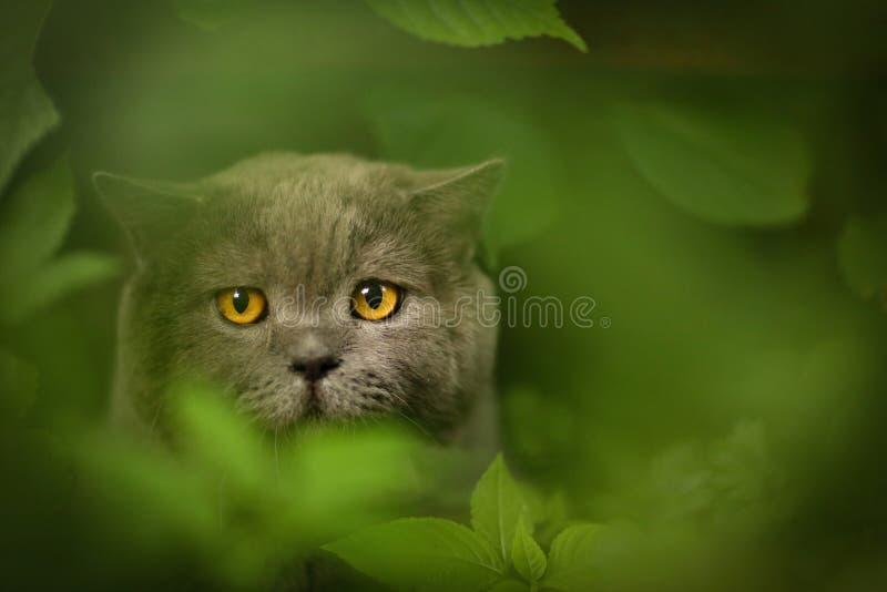 Foto exterior do verão do gato masculino de Tom imagens de stock royalty free