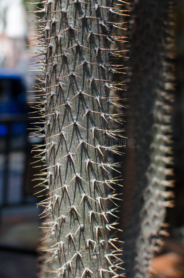 Foto för kaktusSpecieCloseup royaltyfri foto