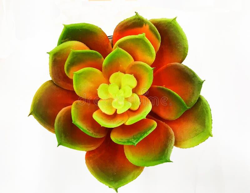 Foto för materiel för bild för Rosette Succulent litet växtbild arkivfoto