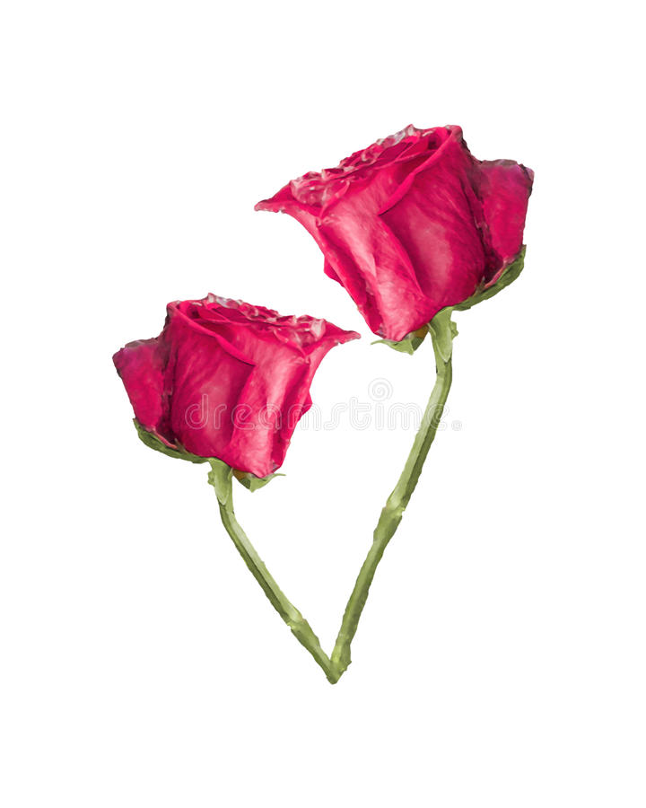 Foto för röda rosor vektor illustrationer