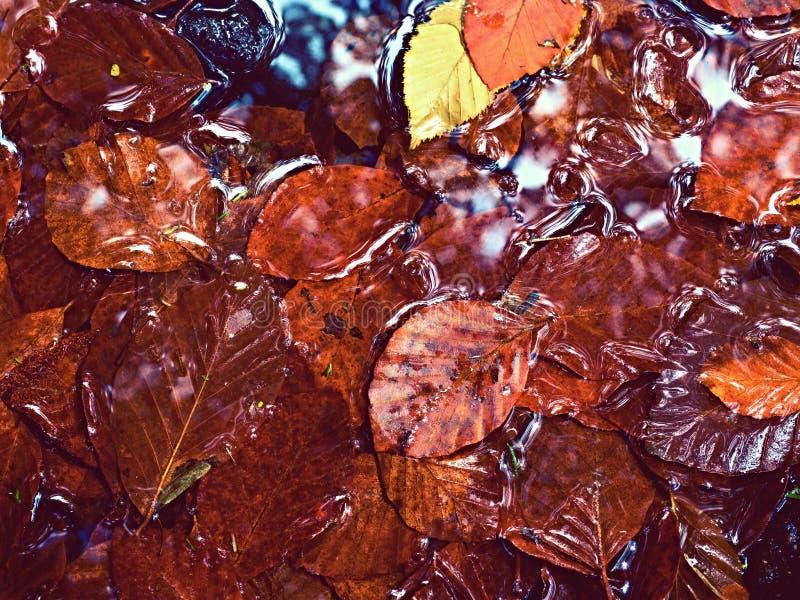 Foto filtrada O cascalho no rio da montanha coberto com a queda sae foto de stock royalty free