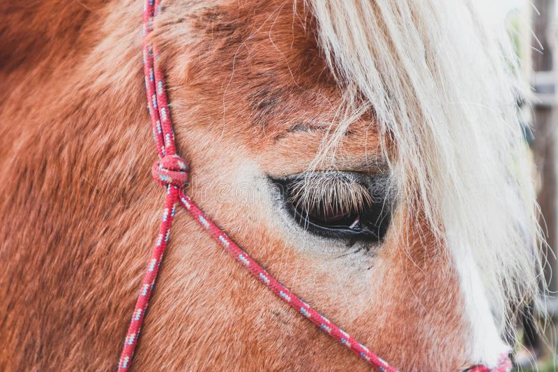 A foto horizontal descreve o cavalo marrom e branco bonito bonito imagens de stock royalty free