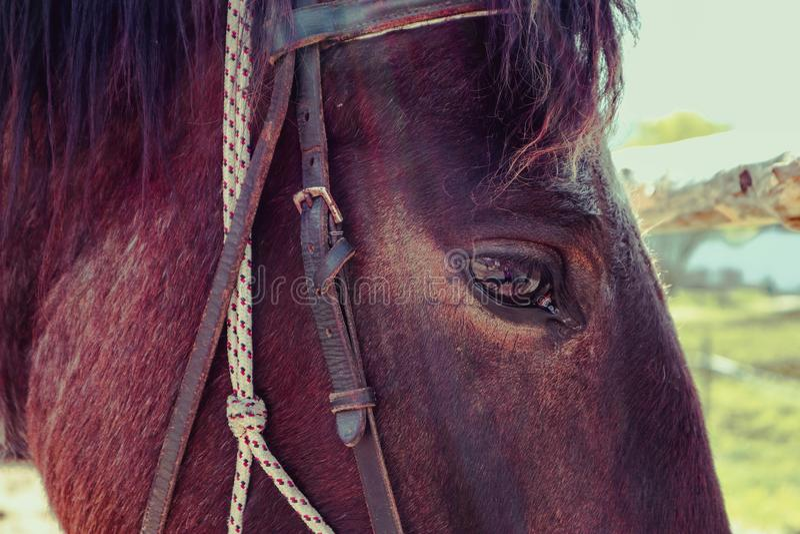 A foto horizontal descreve um gaz bonito bonito do cavalo do marrom escuro fotos de stock royalty free