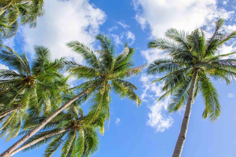 Foto idílico da palmeira e do céu azul para o fundo Palmas de cocos verdes com folhas bonitas imagem de stock royalty free