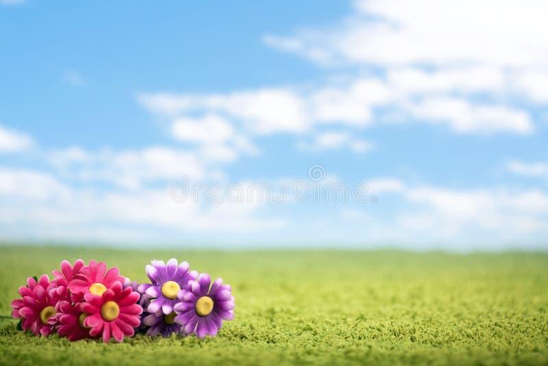 Foto-ilustração das flores no prado imagem de stock royalty free