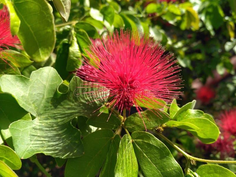 Foto impresionante del fondo estupendo dulce colorido rosado de la flor imágenes de archivo libres de regalías