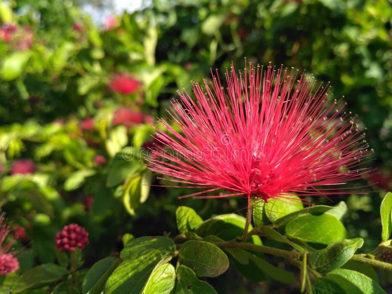 Foto impresionante del solo fondo dulce colorido rosado de la flor imágenes de archivo libres de regalías