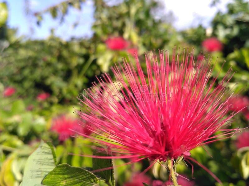 Foto impresionante del solo fondo dulce colorido rosado de la flor foto de archivo libre de regalías