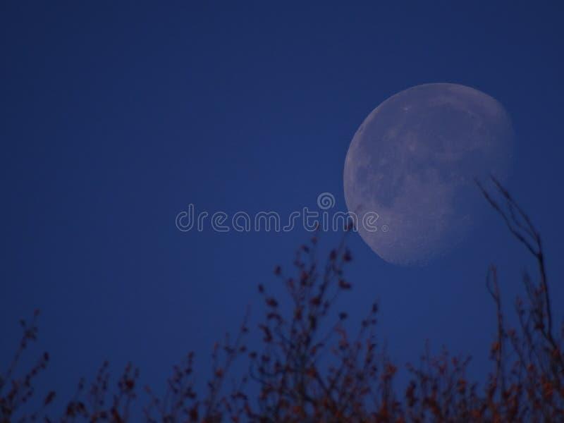 Foto impressionante della luna immagine stock libera da diritti