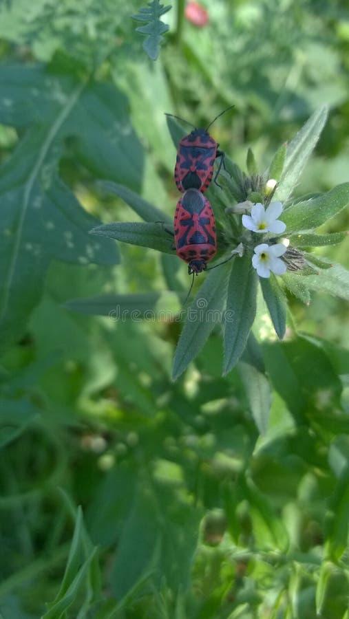 Foto insekty na kwiacie obrazy royalty free