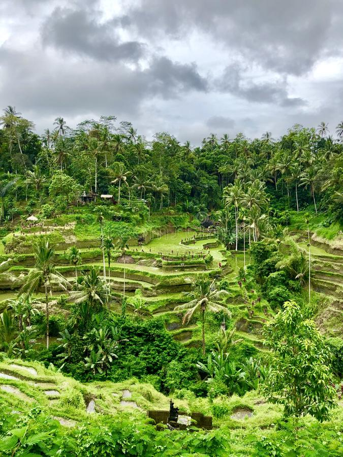 Foto insolitamente bella dei terrazzi del riso fotografia stock