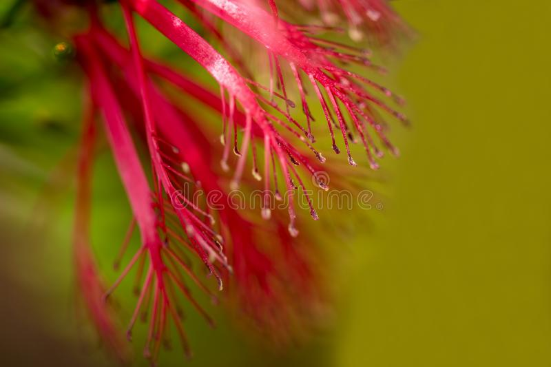 Foto macra abstracta de la flor del desbordamiento de Brogo fotografía de archivo