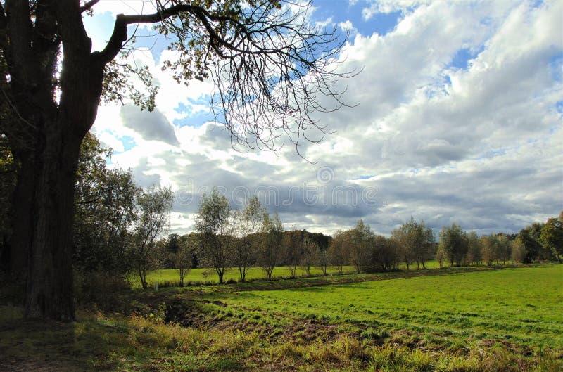 Foto macra con el fondo decorativo del paisaje rural del verano con los árboles, el cielo tenso azul y las nubes blancas fotografía de archivo libre de regalías