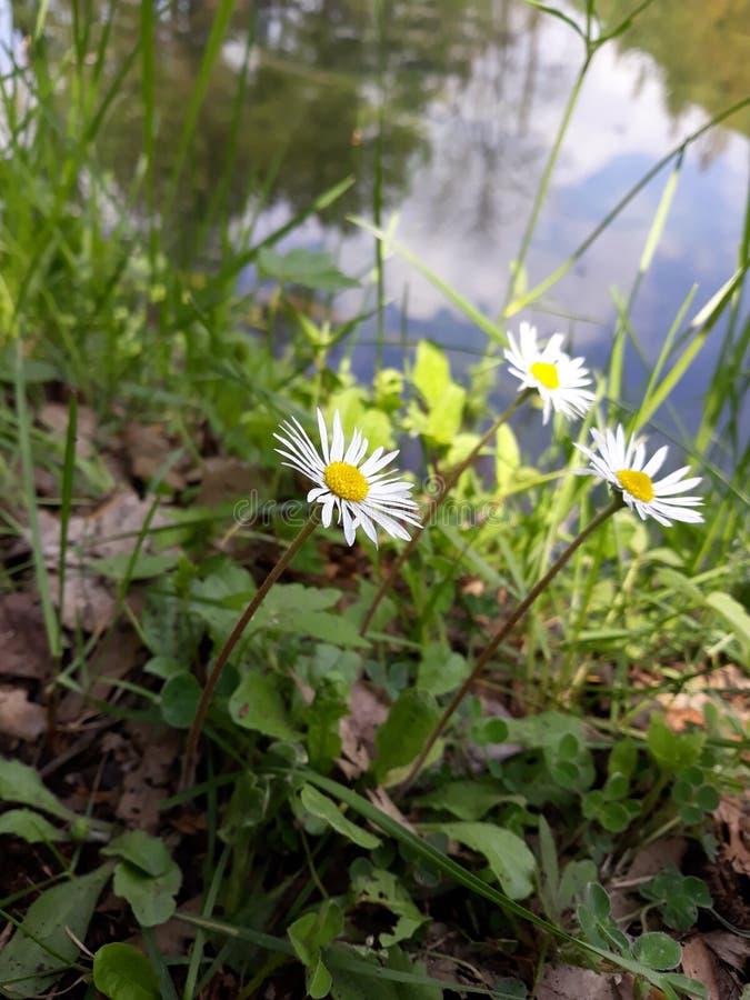 Foto macra de flores en naturaleza cerca del lago imagen de archivo
