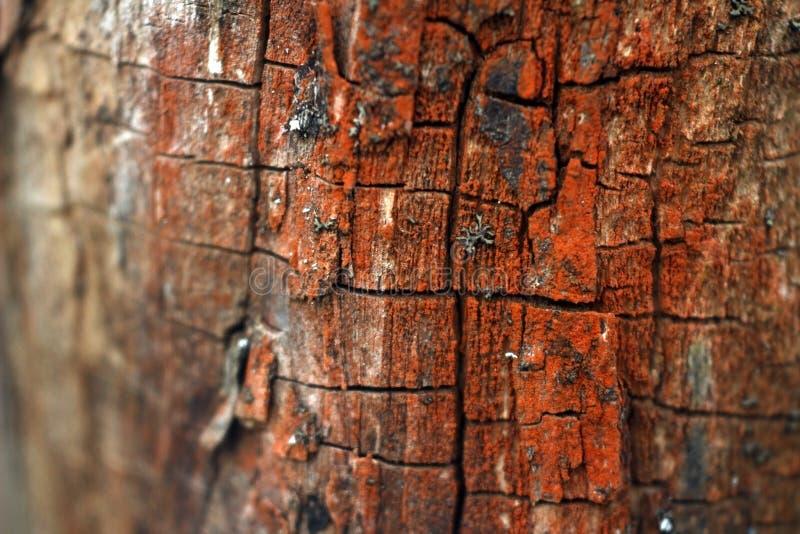 Foto macra de la corteza de árbol roja agrietada foto de archivo libre de regalías