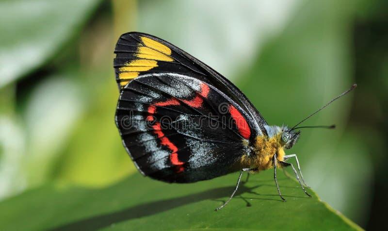 Foto macra de la mariposa fotos de archivo libres de regalías