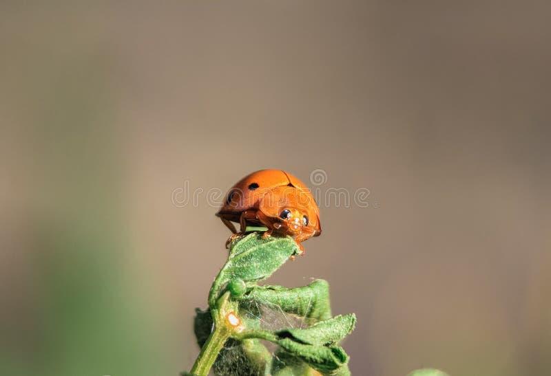Foto macra de la vida del insecto en mi jardín foto de archivo libre de regalías