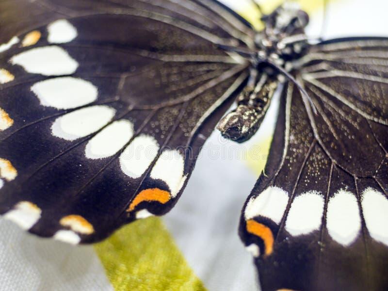 Foto macra de un ala de la mariposa fotos de archivo